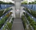 Astronauții de pe ISS au mâncat legume crescute-n spațiu